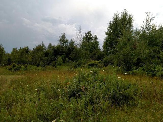 80 acres M-61, Gladwin, MI