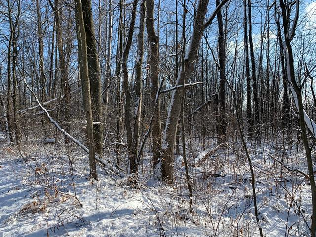 Lot 23 SAGINAW, Beaverton (city), MI