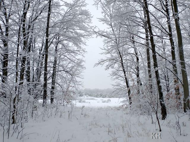 40 acres DUTCHER, Gladwin, MI